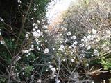 20051126-習志野市秋津5・秋津公園-1145-DSC08675