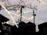 20050329-船橋市湊町1・船橋市立湊町小学校・桜-1712-DSC07641