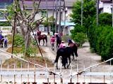 20050529-船橋市若松1・船橋競馬場-1219-DSC02238