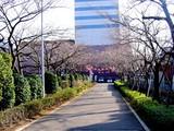 20050326-船橋市浜町2・ららぽとサンガーデンホテル・桜-1604-DSC07226