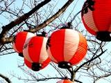 20050326-船橋市浜町2・ららぽとサンガーデンホテル・桜-1604-DSC07232