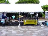 20050604-習志野市秋津5・秋津公園・自然観察センター・谷津干潟の日-1150-DSC02578