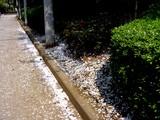 20050416-習志野市・習志野緩衝緑地・秋津公園-0952-DSC08672