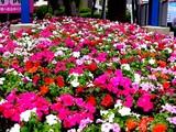 20050508-船橋市浜町2・ららぽーと・花壇とポール-1514-1514-DSC09589