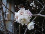 20051126-習志野市秋津5・秋津公園-1144-DSC08670