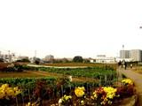 20051126-JR津田沼駅南口・農地再開発-1340-DSC08932
