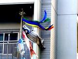 20050504-船橋市浜町2・マンションのこいのぼり-1458-DSC00714