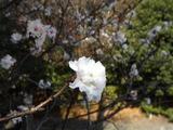 20051126-習志野市秋津5・秋津公園-1145-DSC08678