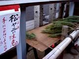 20051228-船橋市本町4・厳島神社・しめ飾り-1503-DSC02507