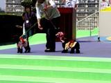 20050505-船橋市浜町2・ららぽーとウェスト・ペットエコ横浜・ワンちゃんのファッションショー-1335-DSC00745
