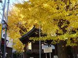 20051205-船橋市本町1・稲荷神社・黄葉-1218-DSC09981