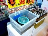 20050813-スーパーバリュー・青森産どじょう-1217-SN320382