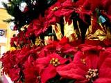 20051112-ビビットスクエア・クリスマス-1438-DSC06660