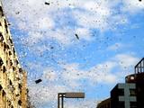 20051120-ロッテマリーンズ・幕張パレード-1155-DSC08002