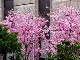 20050402-船橋市市川市二俣・NTTロジスコ-1204-DSC07825