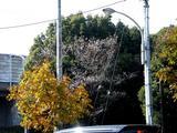 20051126-習志野市秋津5・秋津公園-1142-DSC08668