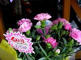 20050506-船橋市本町4・園芸総合センター・伊東屋-1038-DSC01187