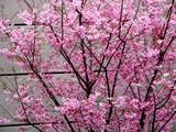 20050402-船橋市市川市二俣・NTTロジスコ-1205-DSC07826