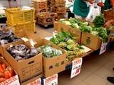 20050919-船橋市JRA中山ケイバ・フリーマーケット-1153-DSCF2344