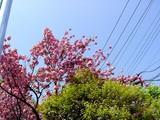 20050424-船橋市本町・天沼弁天池公園-1112-DSC09377