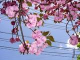 20050424-船橋市本町・天沼弁天池公園-1113-DSC09380
