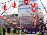 20050326-船橋市浜町2・ららぽとサンガーデンホテル・桜-1604-DSC07229