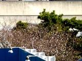 20051116-船橋競馬場・十月桜-0841-DSC07127
