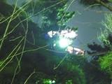 20050109-1749-船橋市宮本5・灯明台祭-DSC03907