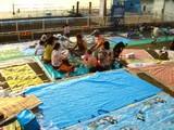 20060726-船橋市民まつり・船橋親水公園花火大会-1758-DSC02957
