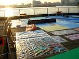 20060726-船橋市民まつり・船橋親水公園花火大会-1757-DSC02953