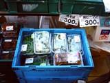 20060726-船橋市民まつり・船橋親水公園花火大会-1725-DSC02845