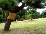 20061119-東京都江戸川区・葛西臨海公園-1135-DSC02128