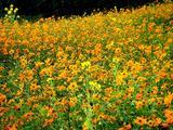 20061119-東京都江戸川区・葛西臨海公園-1203-DSC02226
