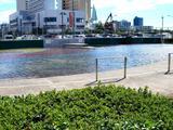 20061007-熱帯低気圧(台風16号)・暴風雨・海浜幕張-1222-DSC04975