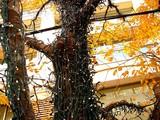 20061215-東京都千代田区丸の内・光都東京ライトピア-1246-DSC07861