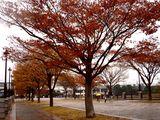 20061119-東京都江戸川区・葛西臨海公園(中)-1218-DSC02283M