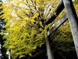 20061123-船橋市宮本5・大神宮・秋-1316-DSC02708