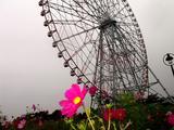 20061119-東京都江戸川区・葛西臨海公園-1206-DSC02239