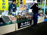 20061125-船橋市若松・船橋競馬場・ふれあい広場-1144-DSC04158