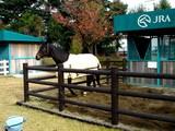 20061126-船橋市・中山競馬場・馬とのふれあい-1250-DSC04783