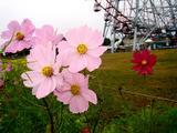 20061119-東京都江戸川区・葛西臨海公園-1207-DSC02243