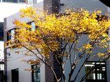 20061210-船橋市湊町・街路樹・秋-1105-DSC07129