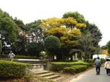 20061123-習志野市・秋津公園・秋-1340-DSC02761