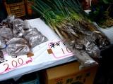 20061112-船橋市農水産祭・船橋中央卸売り市場-1026-DSC00587