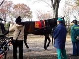 20061126-船橋市・中山競馬場・馬とのふれあい-1106-DSC04477