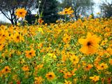 20061119-東京都江戸川区・葛西臨海公園-1203-DSC02228