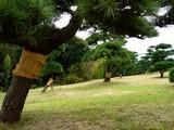 20061119-東京都江戸川区・葛西臨海公園(高解像度版)-1135-DSC02129