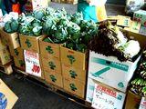20061202-船橋中央卸売市場・ふなばし楽市-1032-DSC05579