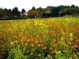 20061119-東京都江戸川区・葛西臨海公園-1209-DSC02249