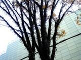 20061215-東京都千代田区丸の内・光都東京ライトピア-1252-DSC07888